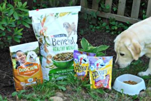 Summer Hiking Tips for Dog Owners