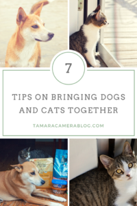 7 Tips On Bringing Dogs and Cats Together