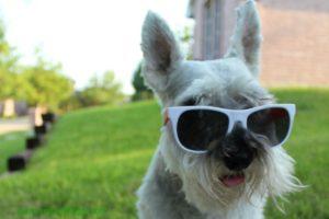 Tips para proteger a tu perro en el verano