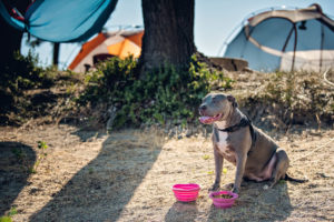 How to Hike With Your Dog in The Summer